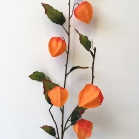 Physallis Orange 78cm