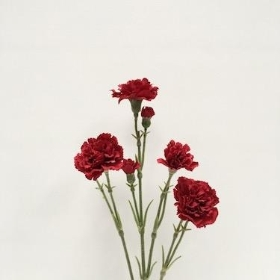 Red Spray Carnation 62cm