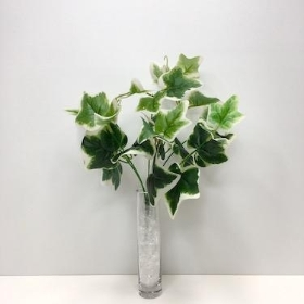 Variegated Ivy Bush 33cm