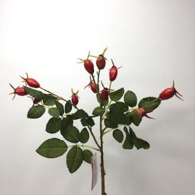 Rosehips Red 53cm