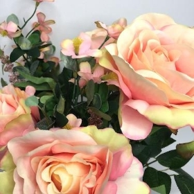 Pale Pink Beauty Rose Bush 42cm