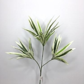Dracaena Green And White Striped 59cm