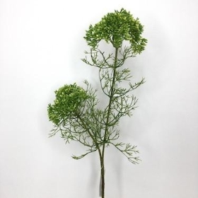 Green Elderflower 57cm