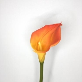 Orange Calla 70cm