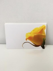 Florist Cards Yellow Rose