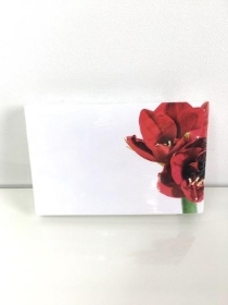 Small Florist Cards Red Amaryllis